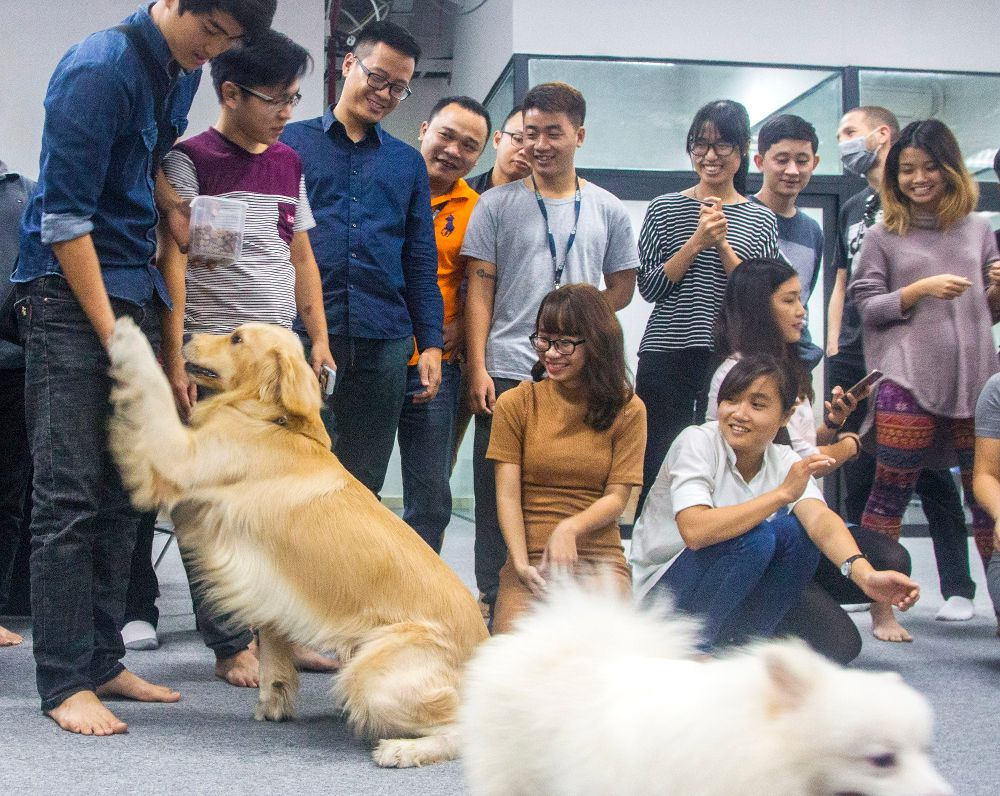 Pets in Puremoderation office
